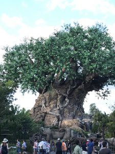 Celebrate The Lion King Returning to DVD/Blu Ray & Five Must Dos at Disney's Animal Kingdom Park